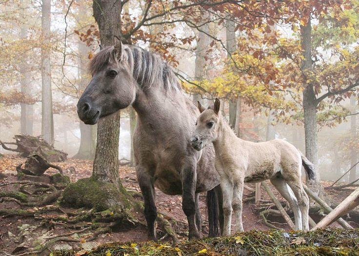 """Résultat de recherche d'images pour """"Vyatka horse"""""""
