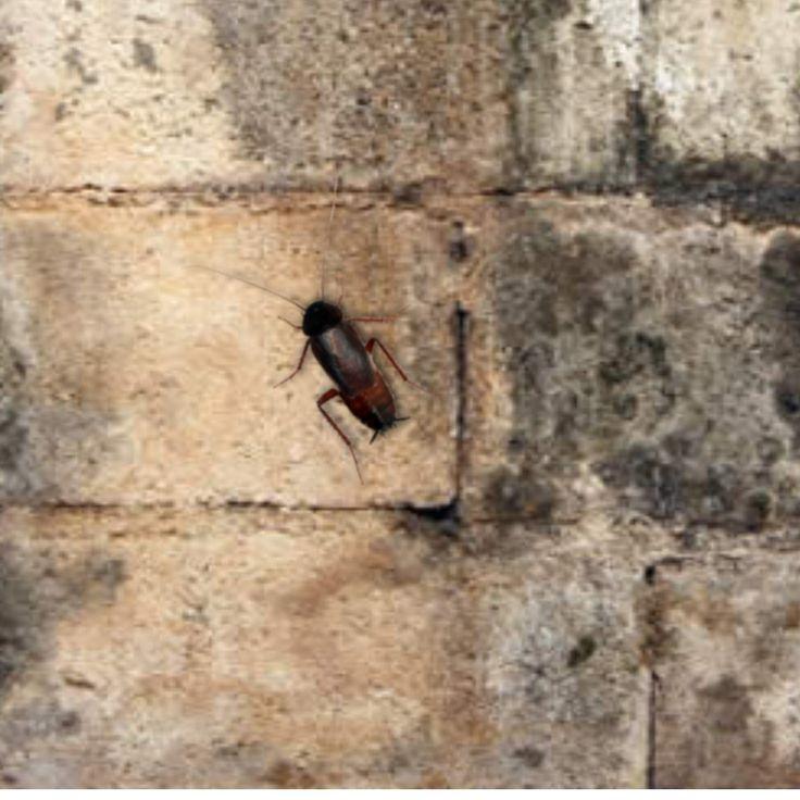 19 Best Termite Control Tucson Images On Pinterest
