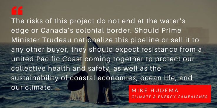 """PRESS RELEASE: New #TransMountain """"oil tanker superhighway"""" endangers Pacific Coast marine life, communities & billions in economic activity from #YVR to #Washington to #Oregon to #California. Full release >> http://act.gp/2K9ifTv  #StopPipelines #stopKM #NoTMX #cdnpoli #bcpoli"""