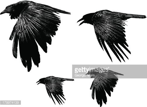 Image result for raven stipple
