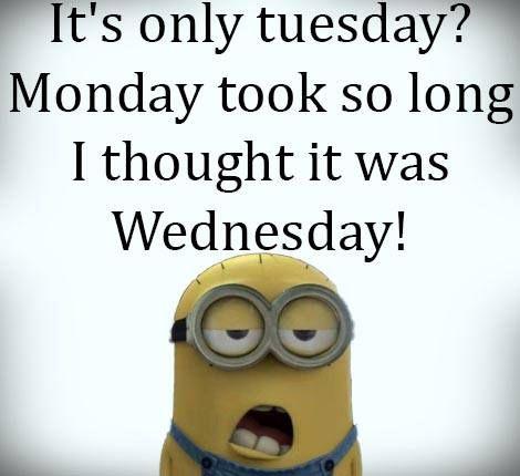 happy tuesday funny meme - photo #3