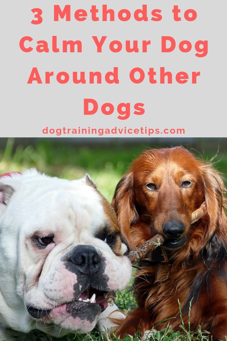 3 Methods To Calm Your Dog Around Other Dogs Dog Obedience