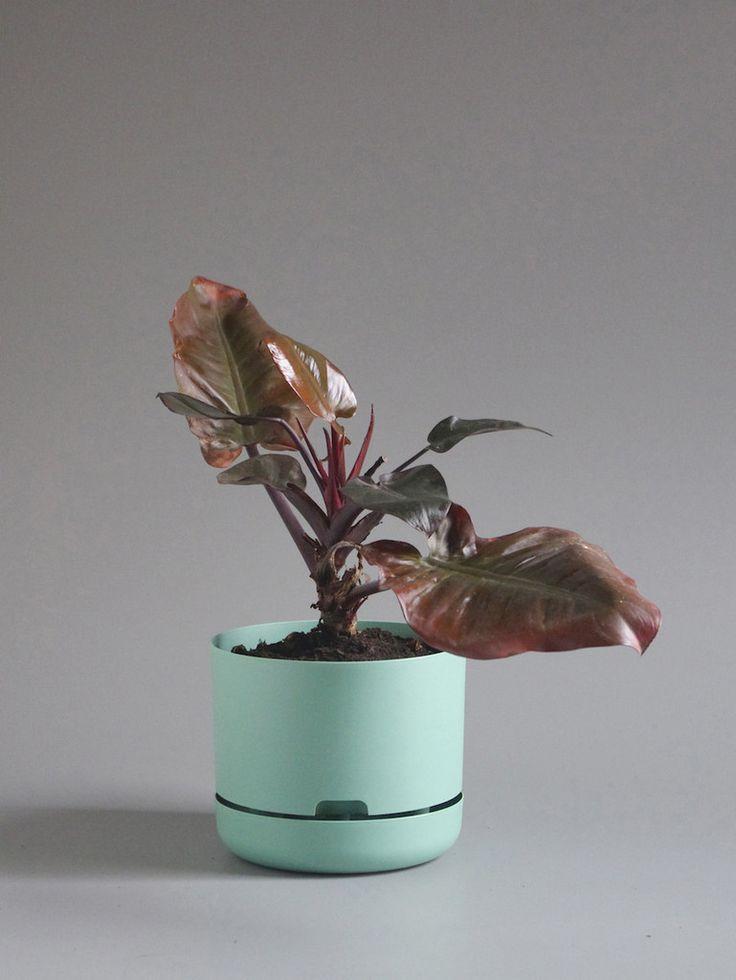 Mr Kitly x Decor Selfwatering Plant Pot 250mm