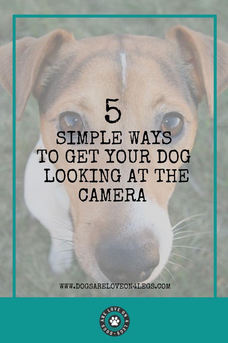 how to take good dog photos