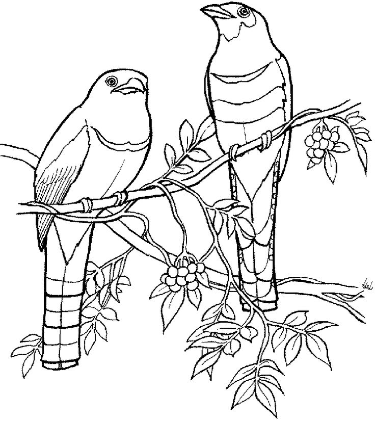 Contour Line Drawing Bird : Images about art ed contour line on pinterest
