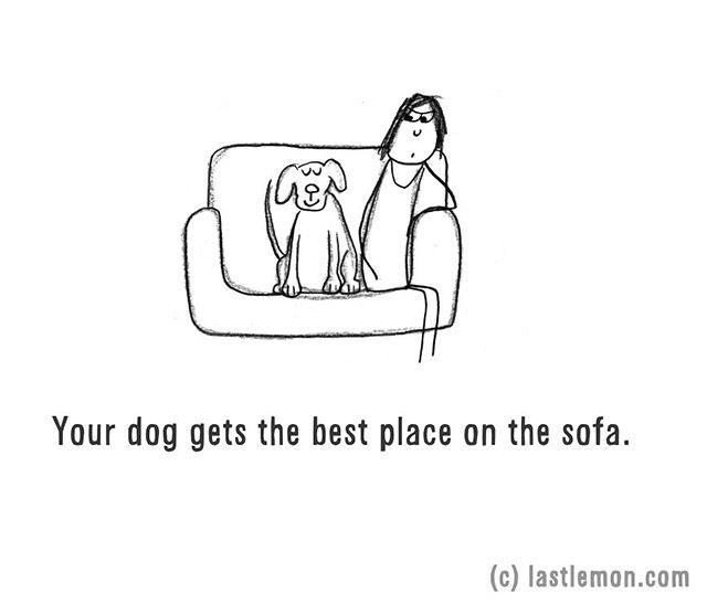 Kényelmesen érzi magát a kutyád a kanapén is
