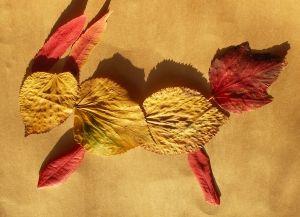 Na rodzinnym spacerze w ciepły jesienny dzień możemy zebrać materiały na obrazek do zrobienia w chłodny jesienny wieczór.