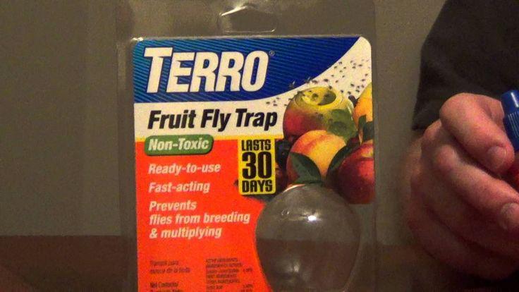 terro fruit fly trap instructions