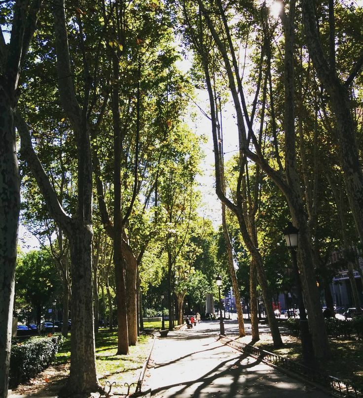 Sunshine in #Madrid - Paseo del #Prado