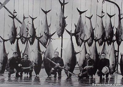 The real 'ol Men and the Sea!! - Michael Lerner, Tommy Gifford And The LeBlanc Brothers Seem Contented With The Weeks Catch Of Blue-fin Tuna Off Wedgeport Nova Scotia.  SenorTuna.com