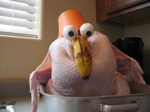 More funny turkey pictures
