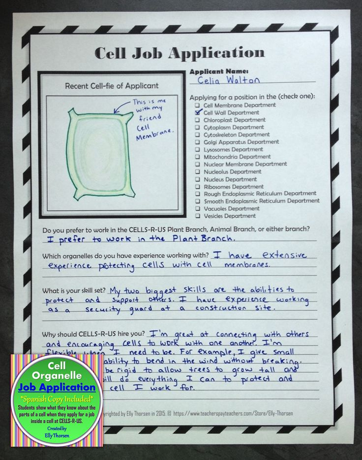 Students show what they know about cells by completing a job application in the point of view of an organelle applying to work in a cell at the company Cells-R-Us.
