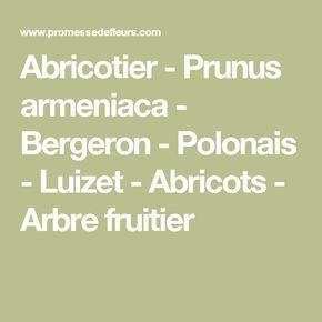 Abricotier - Prunus armeniaca - Bergeron - Polonais - Luizet - Abricots - Arbre fruitier
