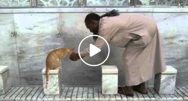 Homem Dedica Um Pouco Do Seu Tempo Para Dar Água a Gato De Rua