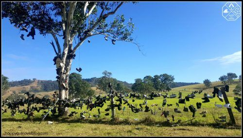 Ladies Well, Chichester State Forest | Barrington Tops | boot hill