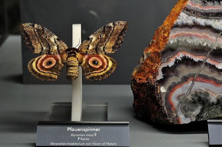 """Flying Jewels"" exhibition in Terra mineralia, Freiberg, Germany."
