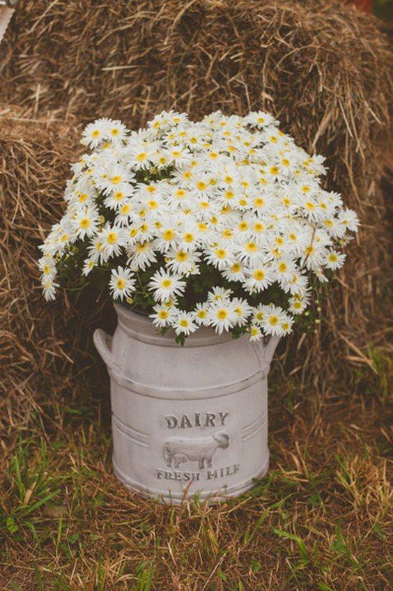 rustic country chamomile daisies wedding decor / http://www.deerpearlflowers.com/chamomile-daisies-wedding-ideas/