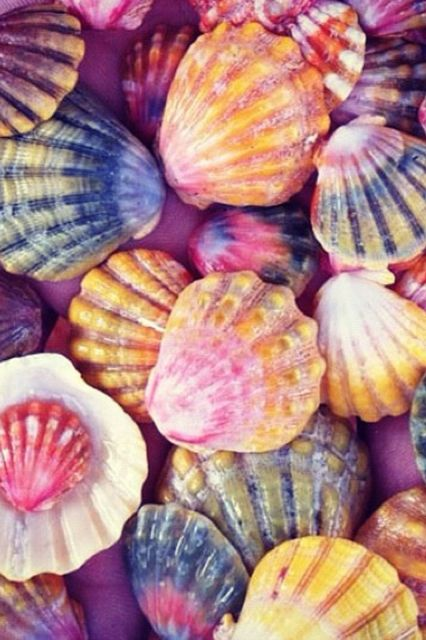 Colourful seashells. Click to shop rainbow colourways by Matthew Williamson.