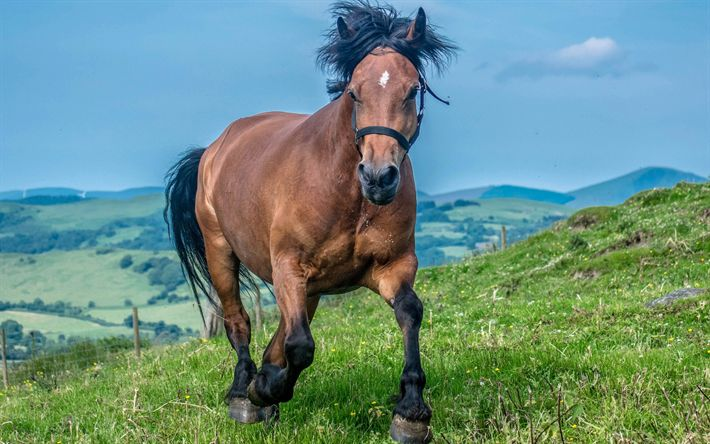 Download wallpapers brown horse, mountain landscape, green grass, big horse