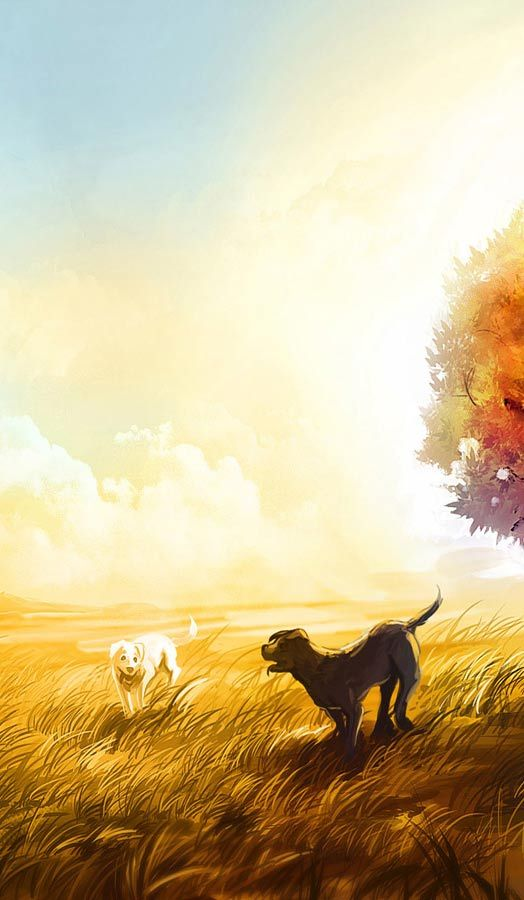 388 best images about Animal Wallpapers Pictures PC Full ... Dog Wallpaper Widescreen