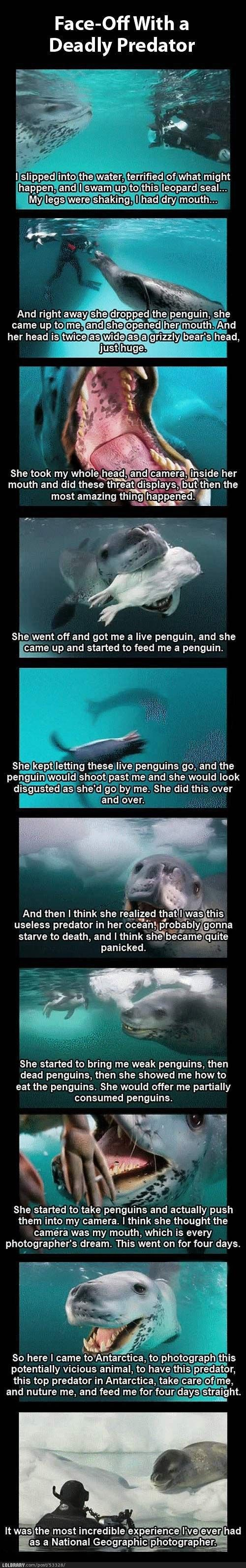 """leopard seal, """"Here would you care for a penguin?  How about this penguin?"""""""