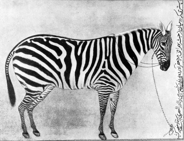 Mansur. Zebra. Miniature. 1620