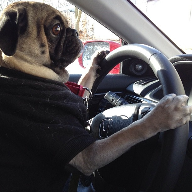 1000 Images About Cool Rides On Pinterest: 1000+ Images About Animals Love Car Rides ! On Pinterest