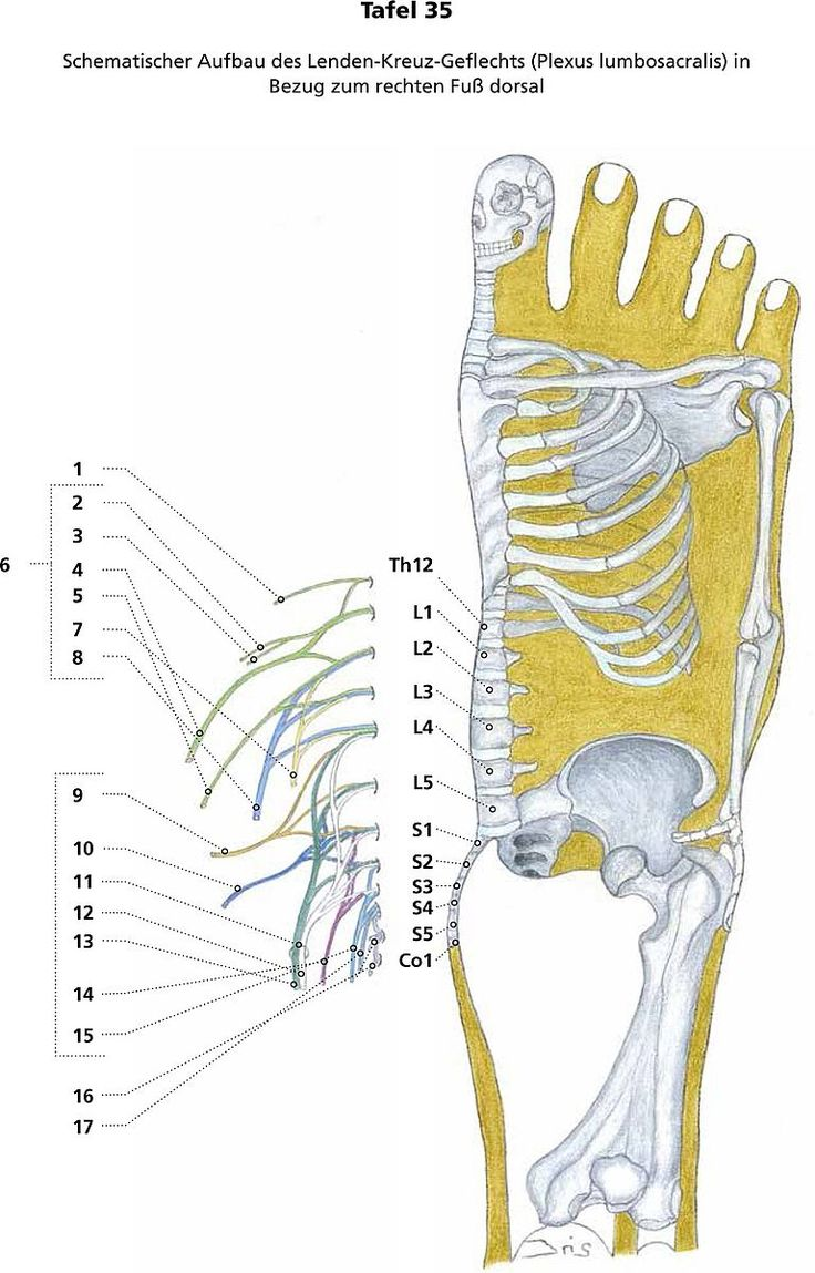 413 best reflexology images on Pinterest | Acupuncture, Health and ...