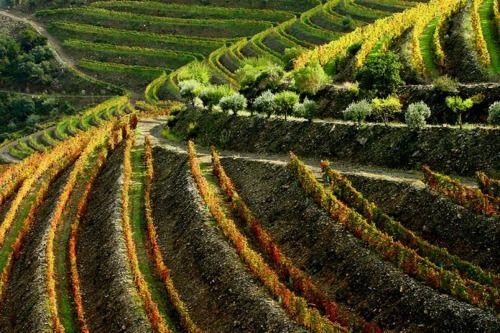 Beautiful Douro