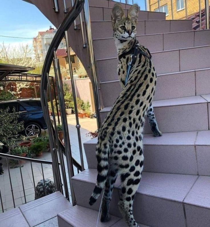 Дом внутри скалы в 2020 г | Смешные мемы о кошках, Кошачьи ...