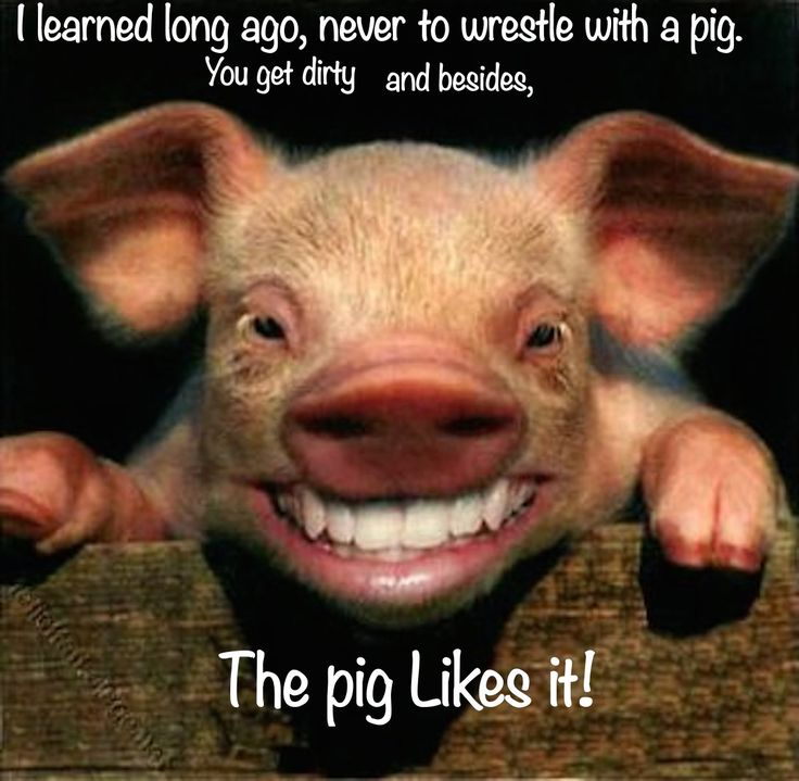Pin By The Art Sherpa Llc On Sticky Pigs The New Barnyard