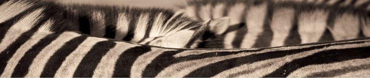 Les petits zèbres | une année à l'école maternelle