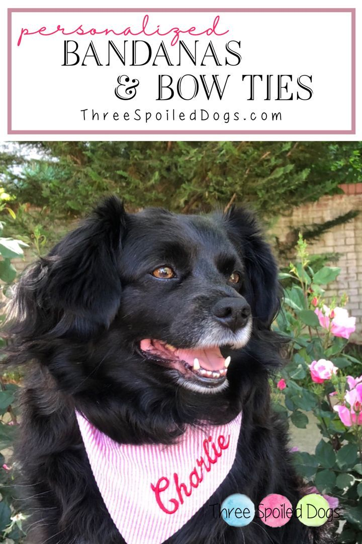 Personalized Dog Bandanas Bow Ties For Your Fabulous Furbaby By