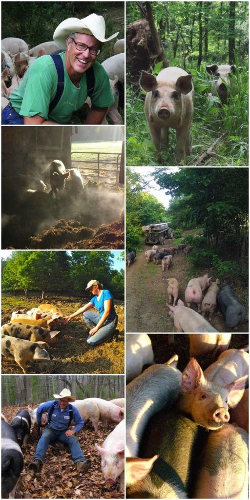 Joel Salatin Webinars - pastured pigs