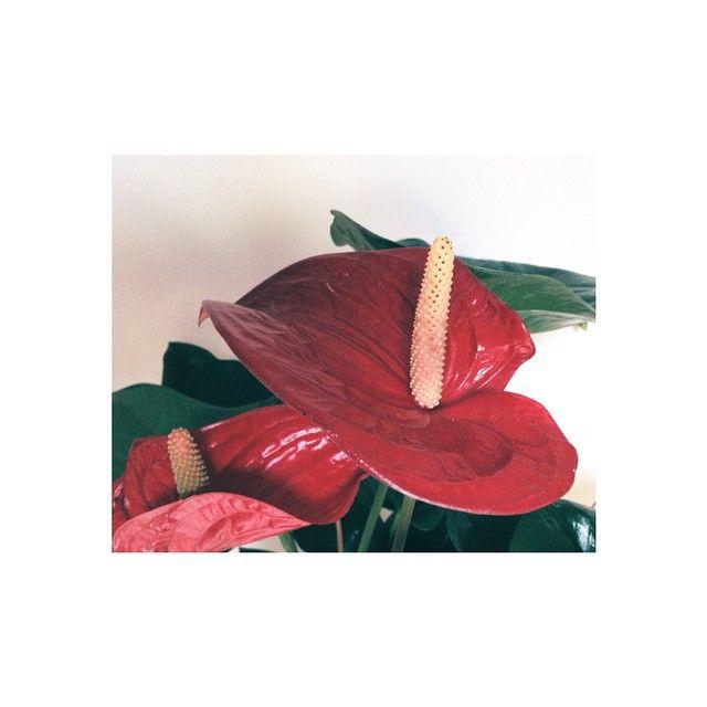 chiarasenatore @chiarasenatore ROSSO FORTE #red ...Instagram photo | Websta (Webstagram)