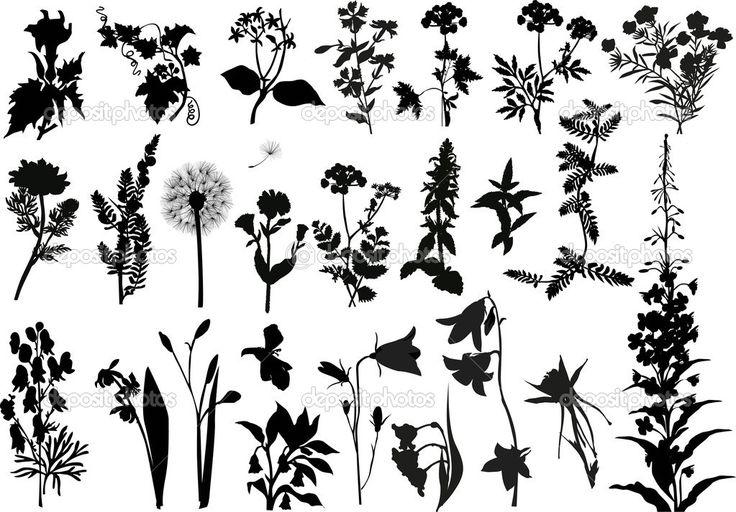 Коллекция силуэтов полевые цветы — Векторное изображение © Dr.PAS ...