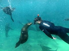 Swimming with Seals in South Africa: Offshore Adventures in Plettenberg Bay