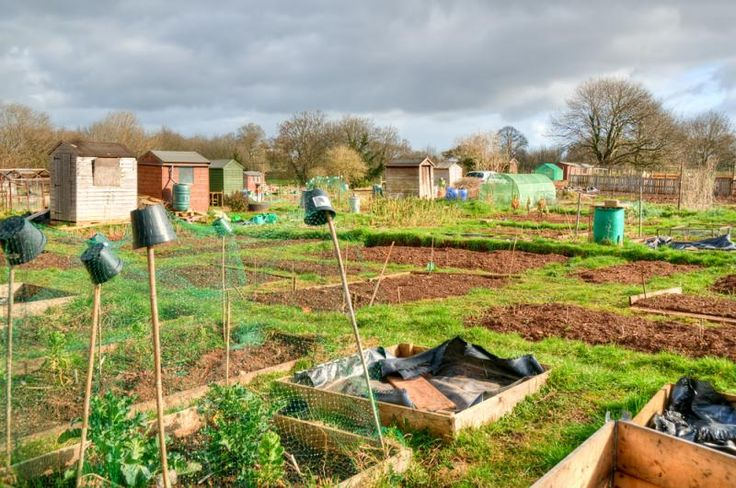 Find out how you can become more involved with National Allotment Week
