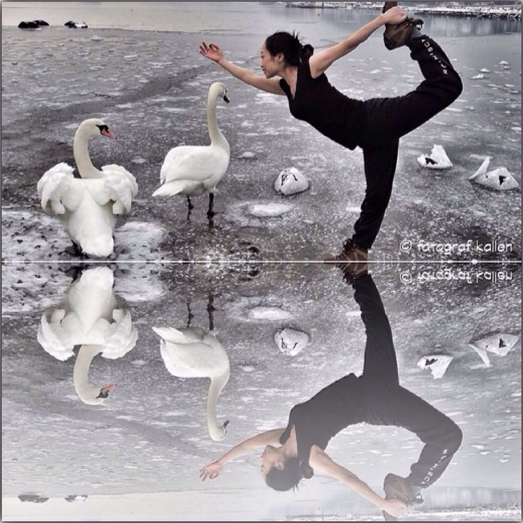 Dancing with swans © fotografkallen.com