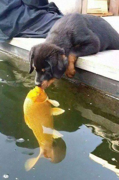 Este cão beijando um peixe causou uma guerra de montagens; veja