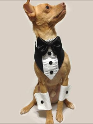 Pet Wedding Attire - How to Dress Pets for Wedding Loved and pinned by planyourperfectwedding.com