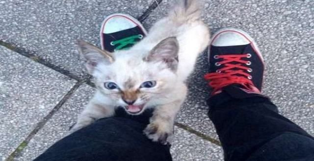 Caught on Camera: Determined Stray Cat Chooses His Owner at Park!