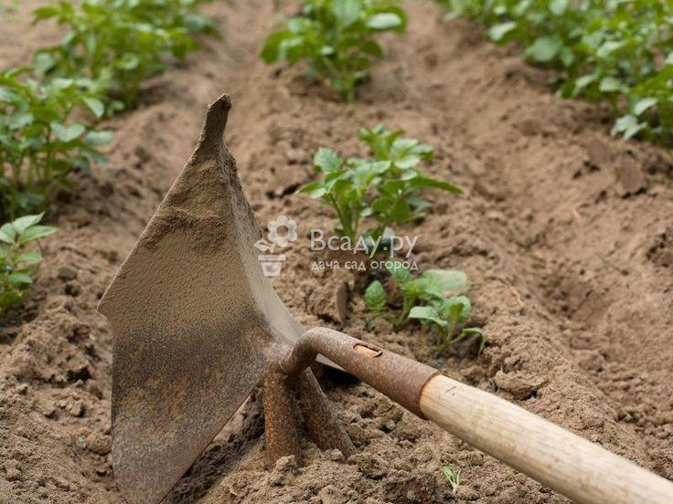 Когда и для чего нужно окучивать картофель  Нужно ли окучивать картофель? Как правильно провести окучивание, когда окучивать картофель. Ручные и механически способы окучивания картофеля