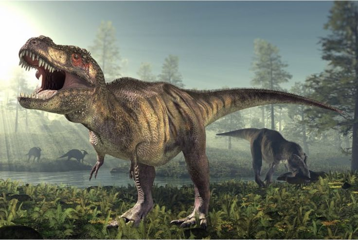 New research seeks to prove once and for all that the Tyrannosaurus rex dinosaur had scaly skin not feathers!