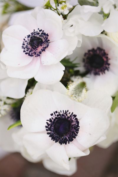 best  white anemone ideas on   anemone wedding flower, Beautiful flower