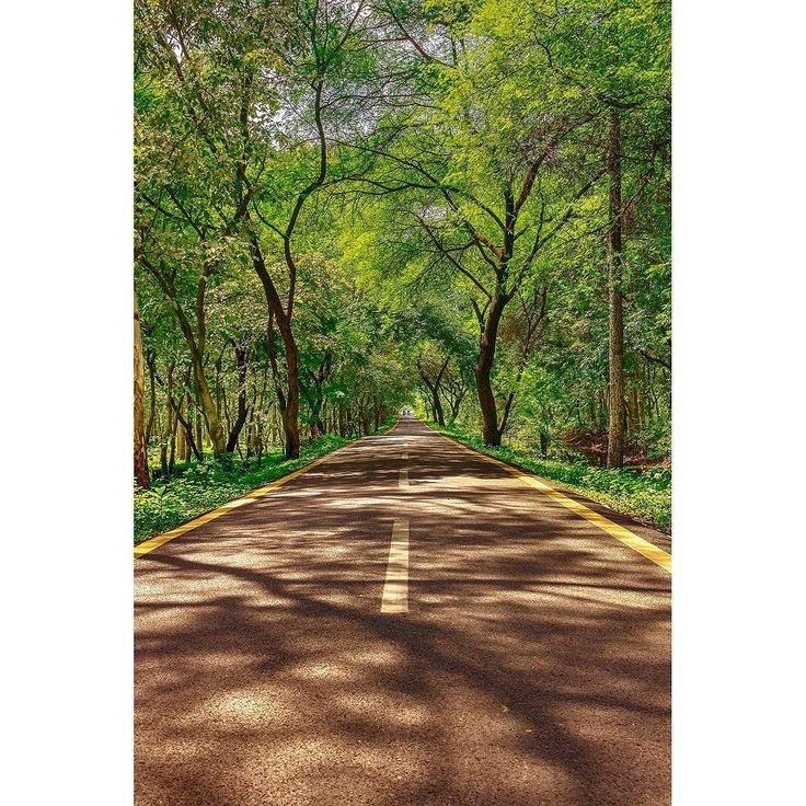 """""""foliage tunnel""""  #nature #earth #beautiful #naturelove #awesome_earthpix #jaw_dropping_shots #photography #angles #EarthVisuals #nature_wizards #doubletap #sunshine #perfect #mothernature #cloudporn #photooftheday #goodweather  #visualmobs #streetarteverywhere #streetpic #streetfashion #streetview #urbangathering #streethype #streetartistry #street_photo_club #streetprowlers #street_perfection #artofvisuals #streetdreamsmag"""