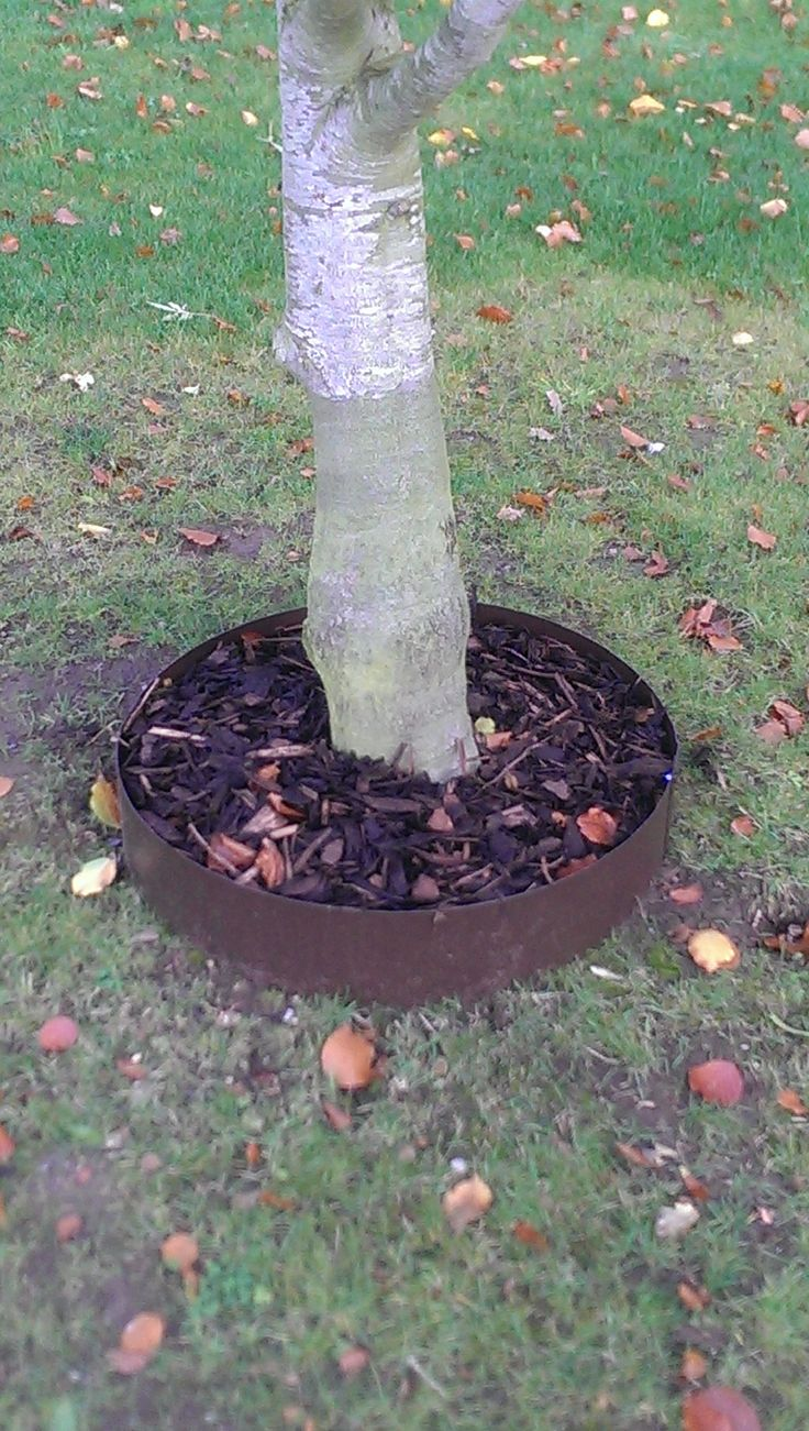 10 Images About Garden Rings On Pinterest Trees And 400 x 300