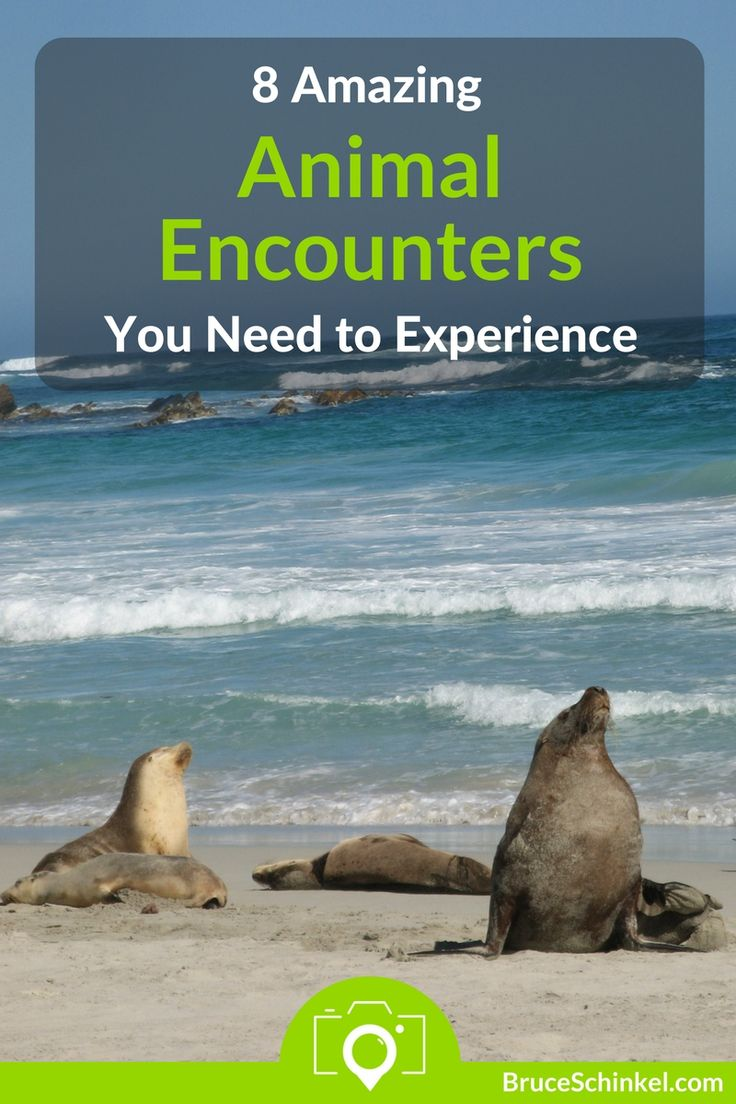 Do you love helping animals while you travel?  I certainly do!  In this post I take you to some of the most amazing animal encounters I've found in my travels.  Click Here and let me know where else I need to visit | amazing animal encounters | animal experiences | wildlife rescue | wildlife sanctuary |