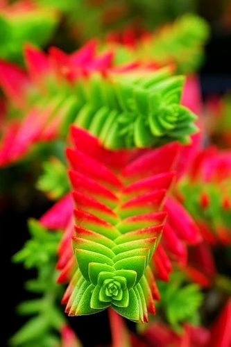 1000 Images About Plants On Pinterest Gardens Flower And Plants