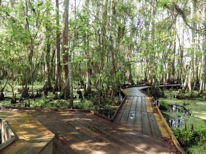 When you want to experience a beautiful hike around New Orleans that you won't soon forget, consider hiking on of the trails in Jean Lafitte National Park, Barataria Preserve. The Palmetto trail, which leads to the Marsh Overlook, is a 1.8 mile hike